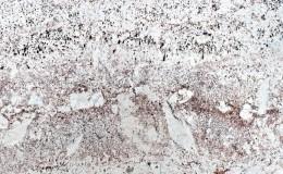 47 granite galaxy bordeaux